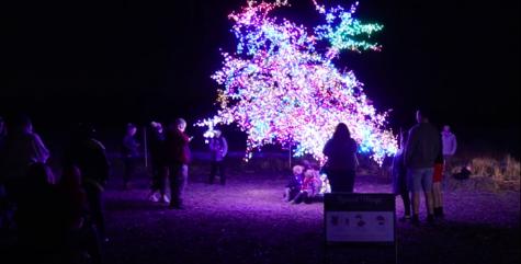 "KPTV ""Magic Tree"""